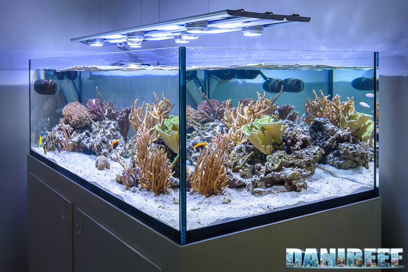 Acquario di Jonathan Betti con plafoniera a led CEAB Slide&Led