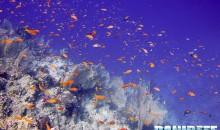 Apre a Treviadone (RM) un acquario marino a cielo aperto di acropore da 1125mc visitabile anche in immersione