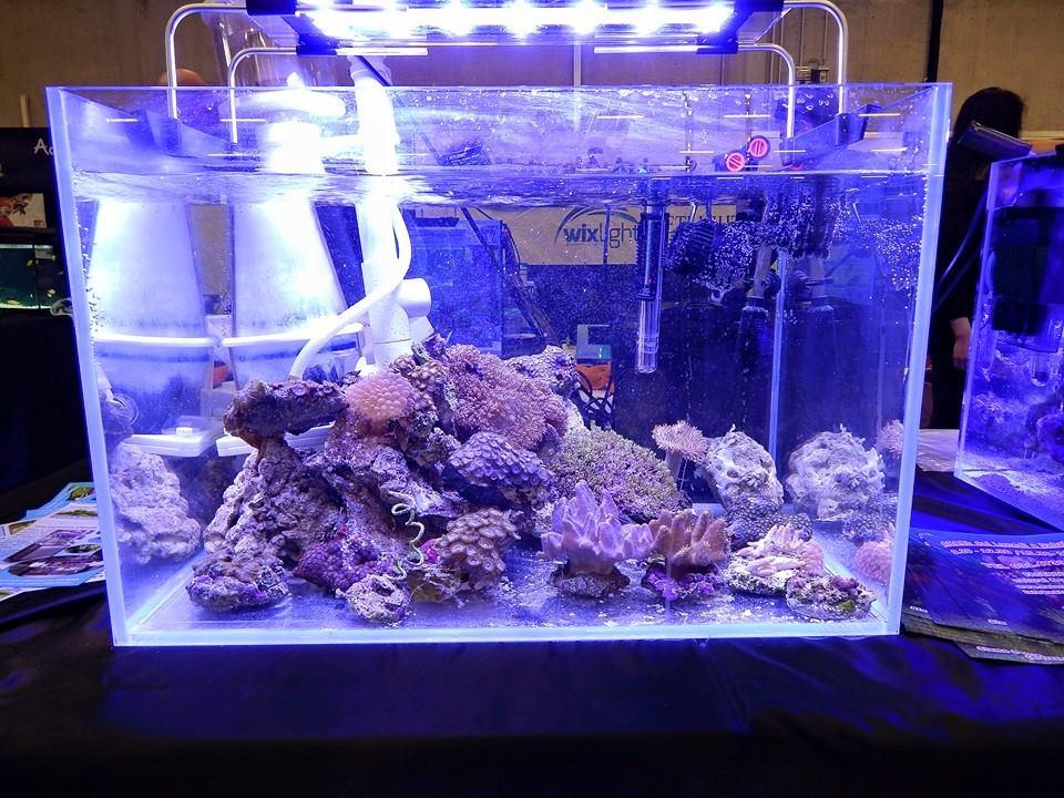 acquario marino esotika