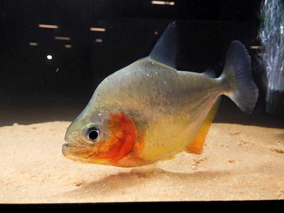 Perché il Piranha è diventato l'assassino che tutti noi conosciamo?