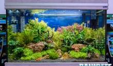 Allestire un acquario ecosostenibile di acqua dolce