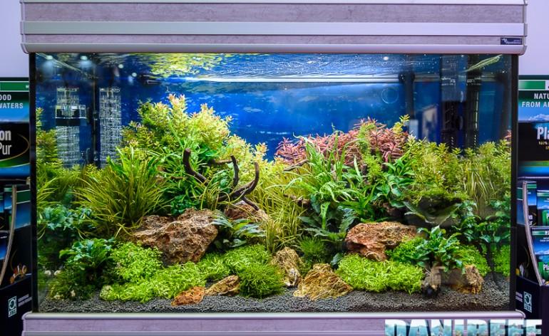 Allestire un acquario ecosostenibile di acqua dolce for Acqua acquario