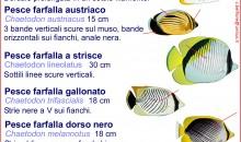 Le schede di identificazione dei pesci del mar rosso – scaricabili gratuitamente e consultabili ovunque
