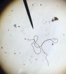 L'acquario marino al microscopio