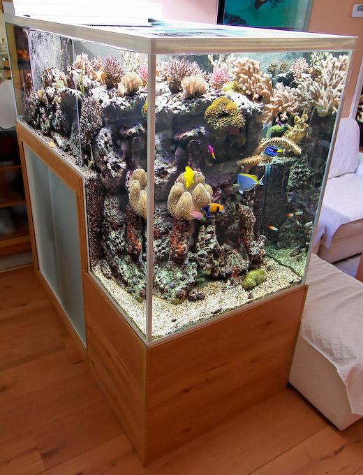 dropoff-reef-aquarium-3