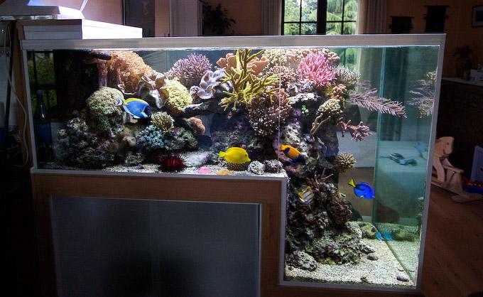 dropoff-reef-aquarium-6