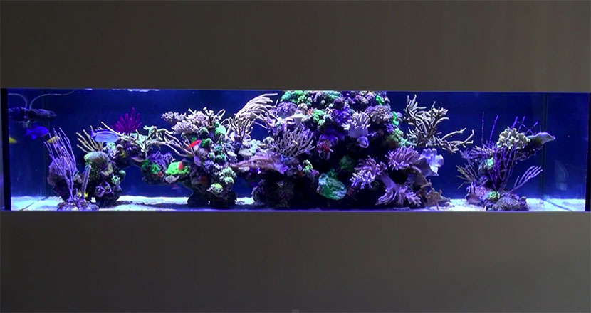 istedgade reef