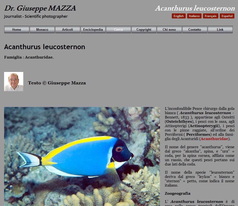 sito photomazza sugli animali - Acanthurus leucosternon