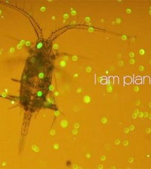 Plankton – zooplankton and phytoplankton – getting to know them