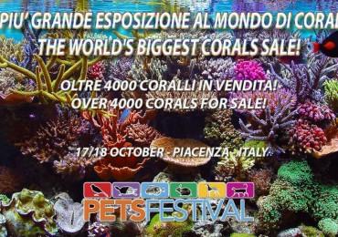 4000 coralli al petsfestival 2015