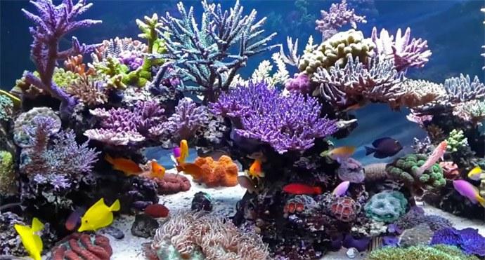Pin pesci marini e coralli animali in vendita a bari on for Acquario vendesi