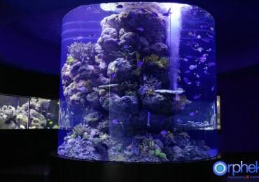 chengdu-aquarium-1-reefs-1024x678
