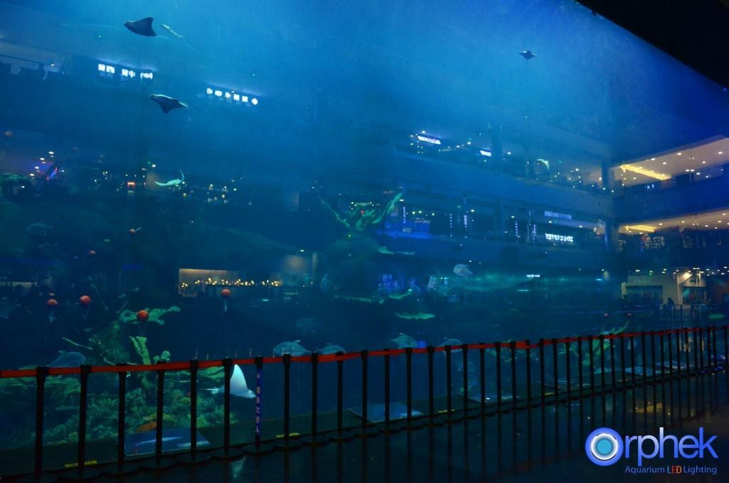 acquario di chengdu