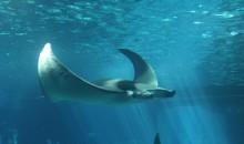 I 25 acquari pubblici più belli del mondo, ed in Italia