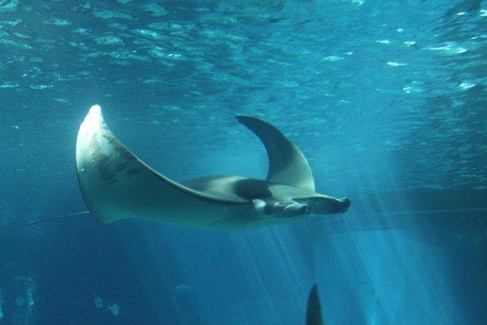 oceanario-de-lisboa