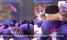 Dalle Mauritius ai negozi – un magnifico video ci mostra il viaggio dei pesci