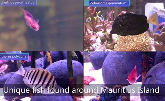 video-dalle-mauritius-ai-negozi