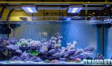 PetsFestival 2015: ReefLine, UltraReef e le AI Hydra HD