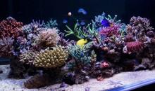 L'incredibile acquario di Joseph (Shih87) su Zeovit.com