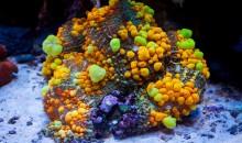 6000 dollari per un corallo… segnato un nuovo record!