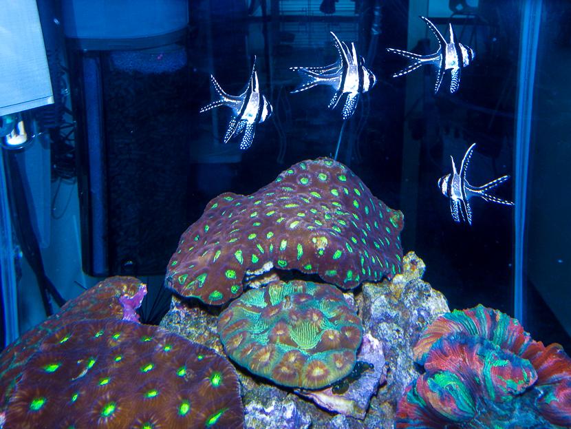 2013_05 JBL plankton pur recensione danireef 01