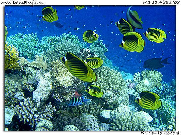 Barriera corallina nel Mar Rosso