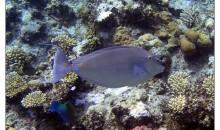 Acquario marino: immorale, inquinante e non sostenibile?
