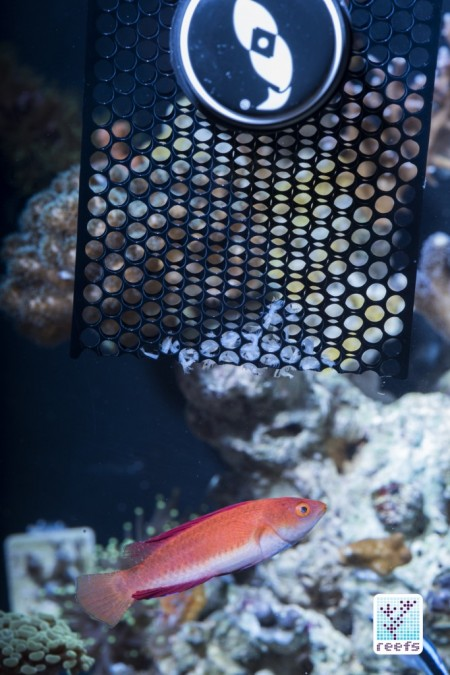 Pouch Feeder e pesci