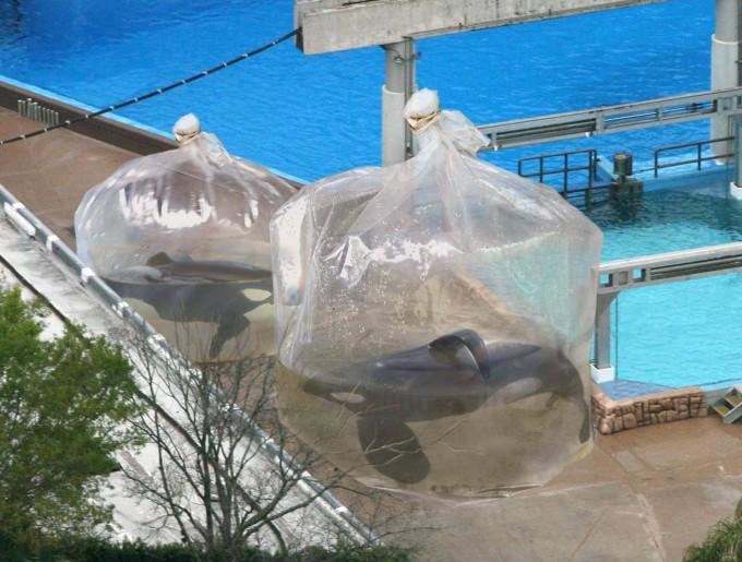 orche in sacchetto