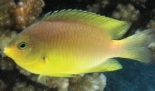 E' ufficiale: i pesci riconoscono i volti