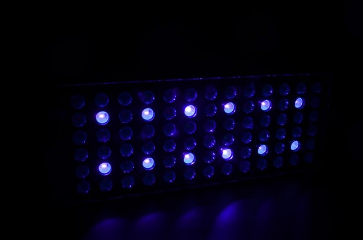 orphek-Atlantik-V3-channel-3-public-aquarium-LED-lighting-9608