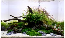 Live Aquascaping Workshop al Garden Vicenza Verde sabato 21 novembre