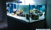 La pianificazione dell'acquario marino: quanti litri?
