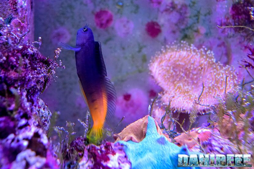 In un acquario di pesci e coralli molli le concentrazioni di nitrati possono essere superiori, senza provocare danni.