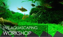 Altri due live aquascaping workshop sabato 12 e domenica 13 dicembre a Torino e a Pavia