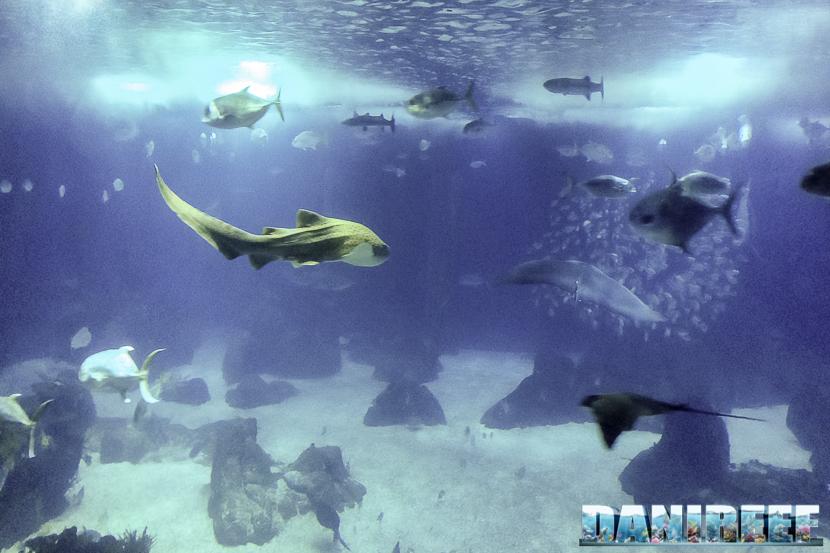 oceanario di lisbona - 005 infinito oceano (2)