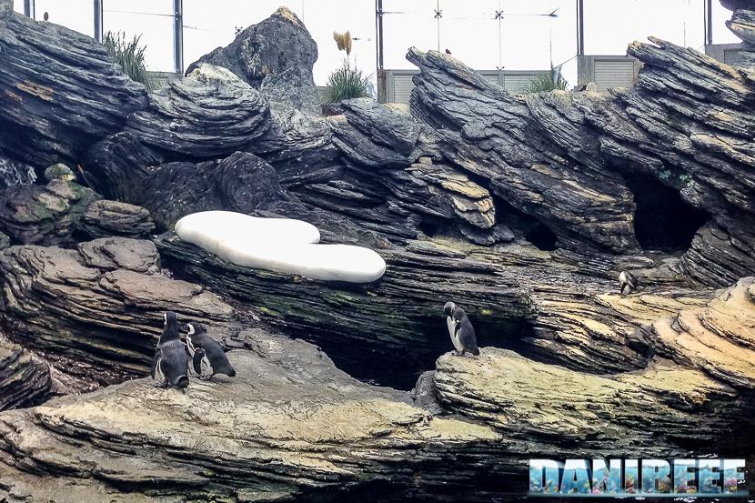 oceanario di lisbona - 006 pinguini di magellano
