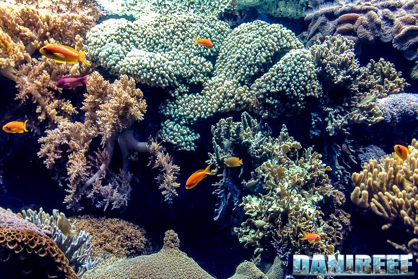 oceanario di lisbona - 008 reef oceano indiano