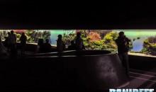 Oceanario di Lisbona – Florestas Submersas – Reportage
