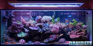 Il bellissimo acquario marino di giuseppe baldi for Acquario marino 300 litri prezzo