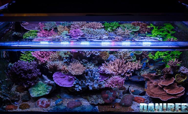 Plafoniere T5 Per Acquari Usate : Il bellissimo acquario marino di giuseppe baldi
