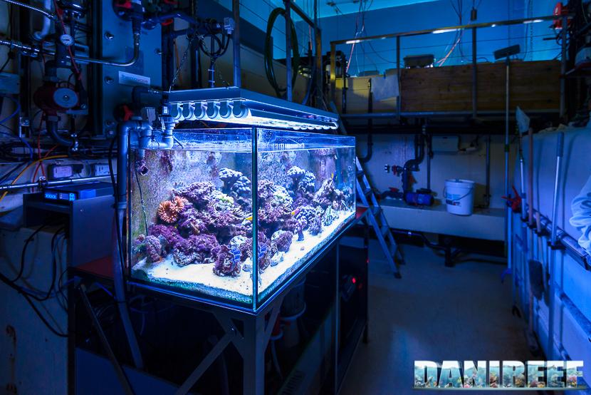 Un acquario per la quarantena degli animali
