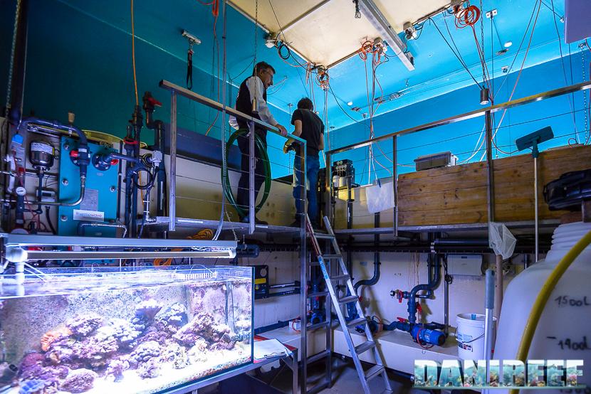 """La """"sump"""" dell'acquario dello zoo di Zurigo è posizionata quasi alla stessa altezza della vasca principale."""
