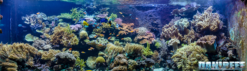 2015_12 Madagascar Reef Aquarium at Zoo Zurich16