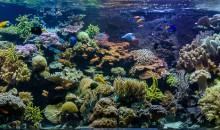 L'Acquario marino tematico del Masoala da 10.000 litri allo Zoo di Zurigo
