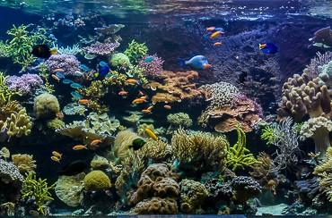 2015_12 Madagascar Reef Aquarium at Zoo Zurich17
