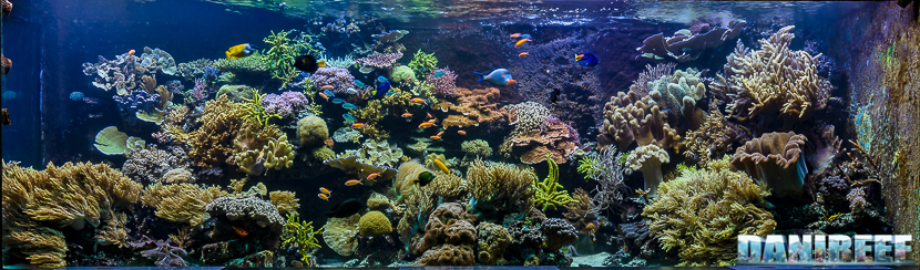 2015_12-Madagascar-Reef-Aquarium-at-Zoo-Zurich17.jpg