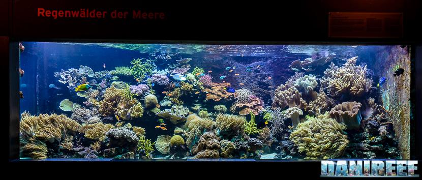 Il pannello frontale dell'acquario marino del Masoala allo Zooh! Zurich