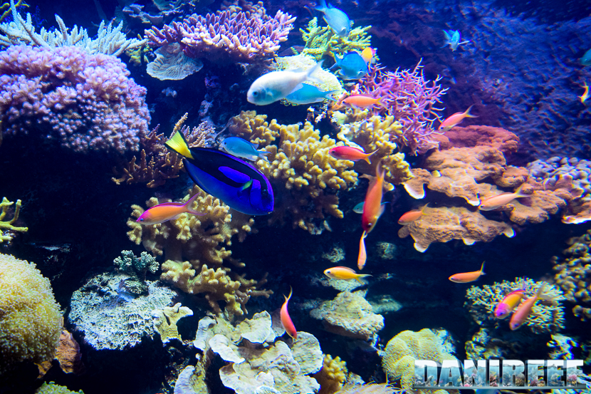 """Il pesce """"Dory"""" che nuota nell'enorme acquario dello Zoo di Zurigo"""