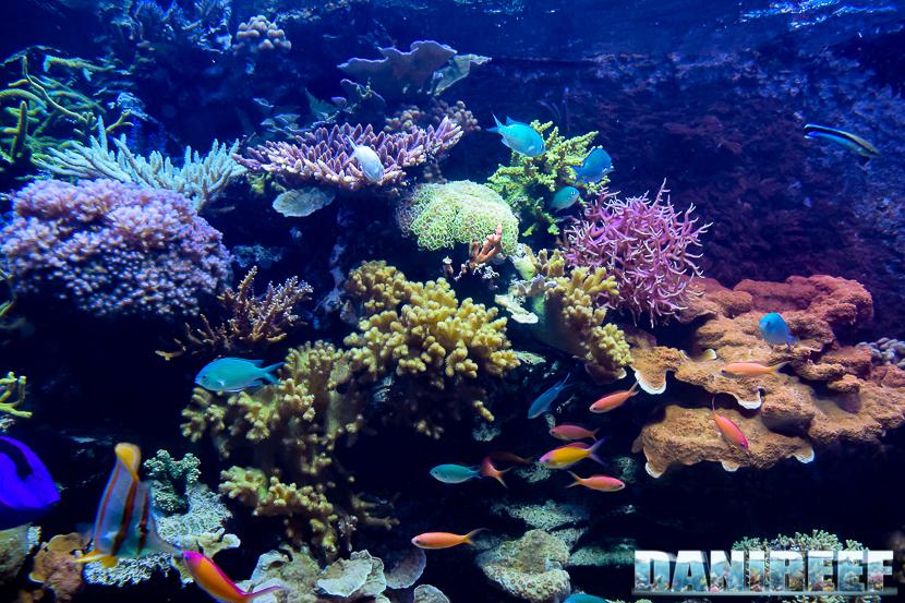 La salute di qualsiasi acquario dipende dalla qualità dell'acqua e può deteriorarsi velocemente in presenza di veleni.